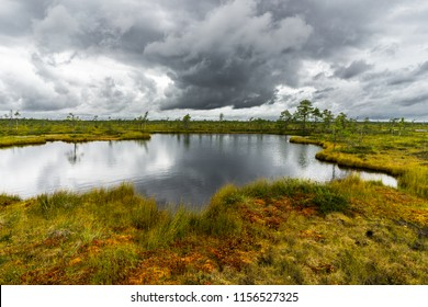 Misty bog landscape with Viru Raba moor in the morning. Lahemaa National park in Estonia.