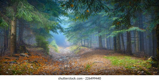 Misty Carpathian forest with old fir trees in a magic blue light