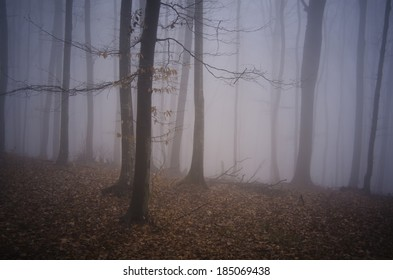 misty colorful forest