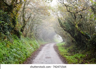 Misty country lane