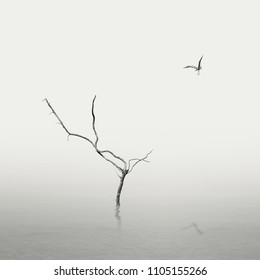 misty creepy dark natural pond tree in the water with bird