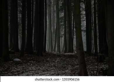 Misty and dark forest during winter - Shutterstock ID 1355906156