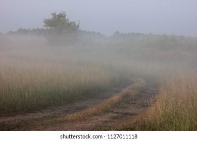 misty dawn in the field