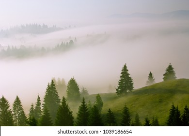 misty dawn fog in mountains,  colorful mist morning scenery with green spruce on hill, summer European landscape, Carpathian national park, Ukraine