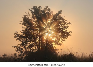 misty dawn with a tree in the sun