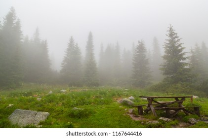 Misty day in a mountain fir tree forest in autumn