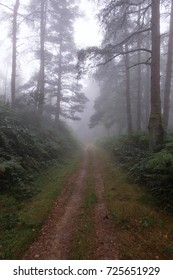 """A misty day on the oldest Camino de Santiago in Spain the """"Camino Primitivo"""" leading from Oviedo to Santiago de Compostela (also called """"Jakobsweg"""" or """"Camino Santiago"""")"""
