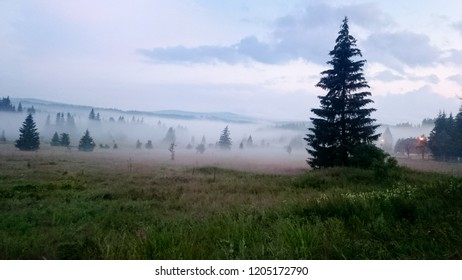 Misty evening in Bohemian Forest. Czech Republic.