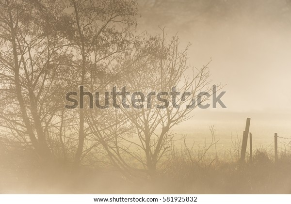 Misty fence and tree background