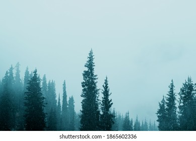 Misty fog in pine forest on mountain slopes. Moody photo of winter and autumn season.