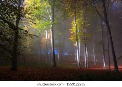 Misty and foggy forest in the autumn morning sun. A Moldavian forest in Neamt county, Romania