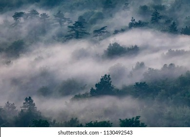 Misty foggy forest, top view. Evening fog on the trees and fields near Buzet town, Croatia. Creative unusual landscape