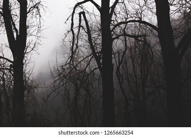 Misty, foggy forest trees on a gloomy winter or fall day.
