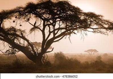 Misty foggy morning on african savannah