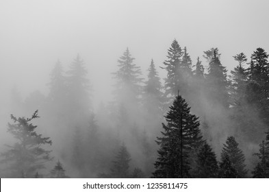 Misty foggy mountain landscape with fir forest in hipster vintage retro style