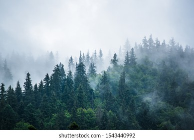 Misty foggy mountain landscape with fir forest and copyspace in vintage retro hipster style - Shutterstock ID 1543440992
