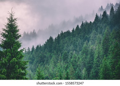 Misty foggy mountain landscape with fir forest and copyspace in vintage retro hipster style