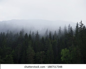 Misty foggy mystical clouds atmosphere mood weather above forest treetops at Caumasee Flims Switzerland