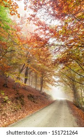 Misty and foggy road in autumn beech landscape.