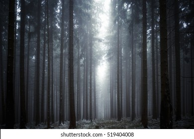 Misty foggy winter forest
