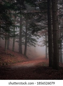 Misty forest in autumn. Dark and moody picture.