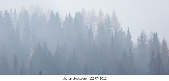 misty forest in autumn winter