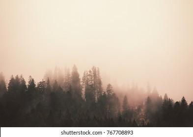 Misty forest, Bucegi Romania