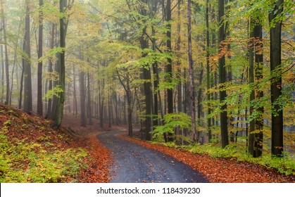 Misty forest during the autumn time, panoramic picture.
