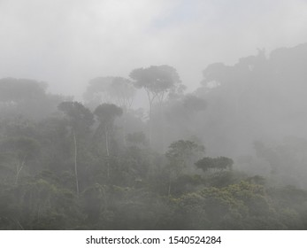 misty forest in the early morning covered with mist in the treetops