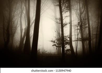 misty forest fantasy landscape