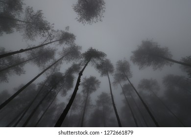 Misty forest in the hill. awesome high tree and extreme weather in indonesia
