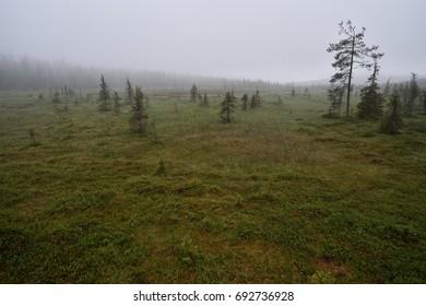 Misty forest in Lapland, Pallastunturi, Mustakero