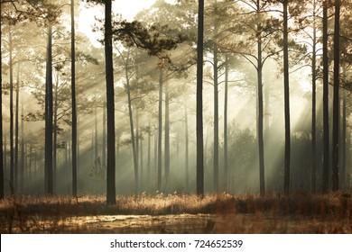 Misty forest near Willtown Bluff in South Carolina's Lowcountry.