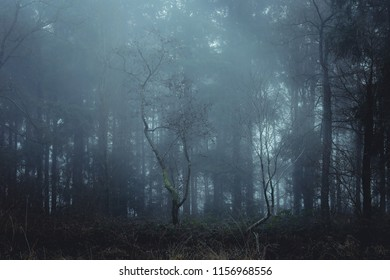 Misty forest in the north of Germany