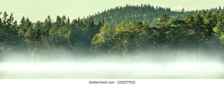 Misty Forest Panorama