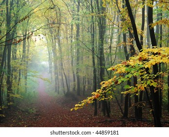 misty forest path in the autumn