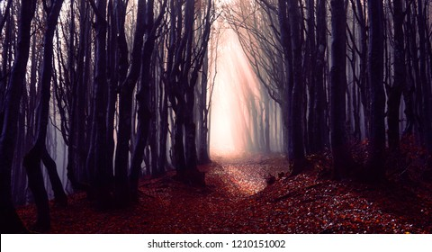 Misty forest path background - Spooky trees in a dark woods  trail with sun beams at autumn season - Foggy morning into the nature with bluish filter look and dark silhouette - Fall lights concept