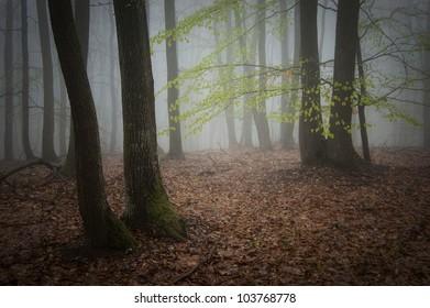 misty forest photo