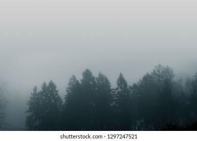Misty forest scenery with pine treetops covered with fog in a moody moment