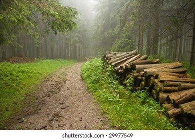 Misty forest in Schwarzwald Germany