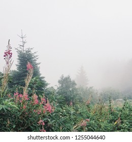 Misty forest, space for text