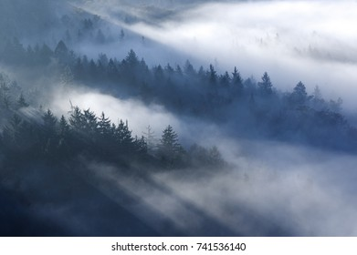 Misty forest in sunlight