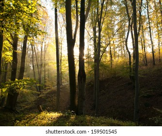 Misty forest with sunshine and fog