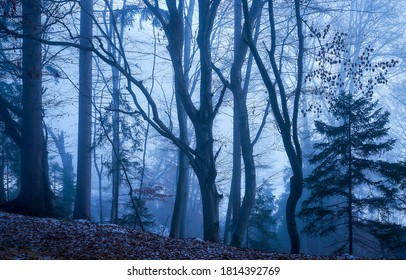 Misty forest trees in autumn. Autumn misty forest trees. Forest trees in autumn misty scene
