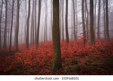 Misty forest with a trunk in the foreground and red leaves on the ground