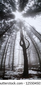Misty forest at winter