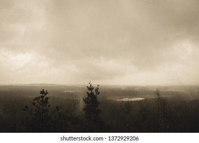 misty forest in winter. far horizon with snow falling down - vintage retro look