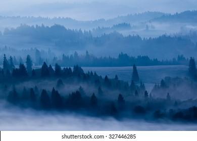 Misty forrest morning