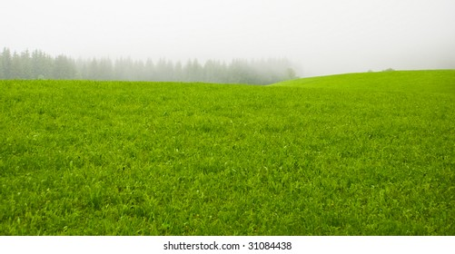 Misty green meadow in a countryside in the morning