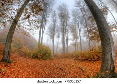 Misty haze in a beechwood in autumn - fish eye lens view